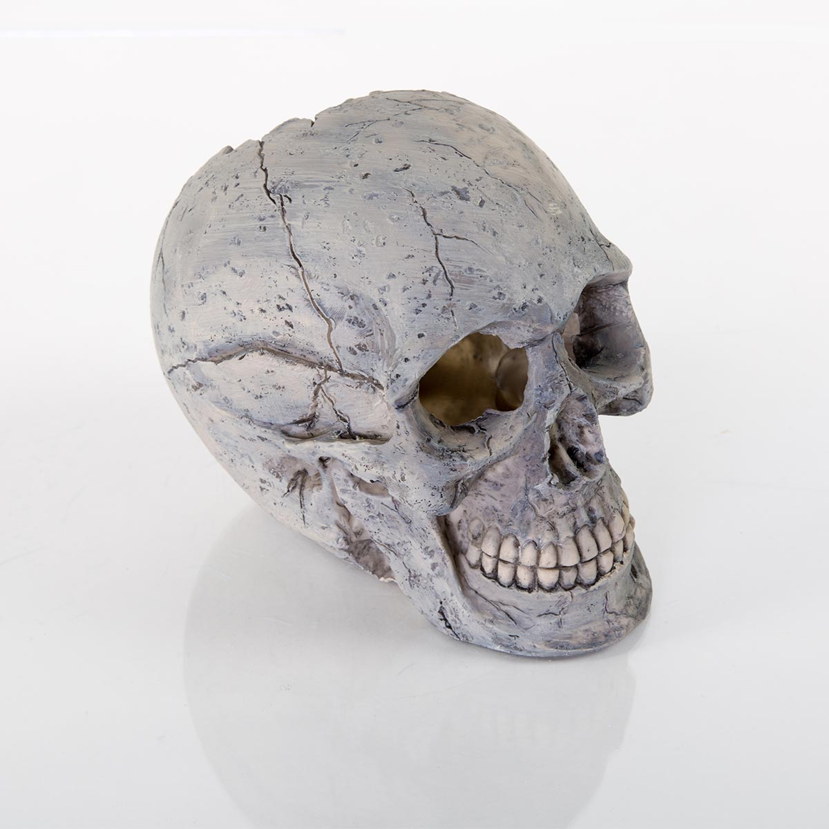 Decorative Human Skull 60131400