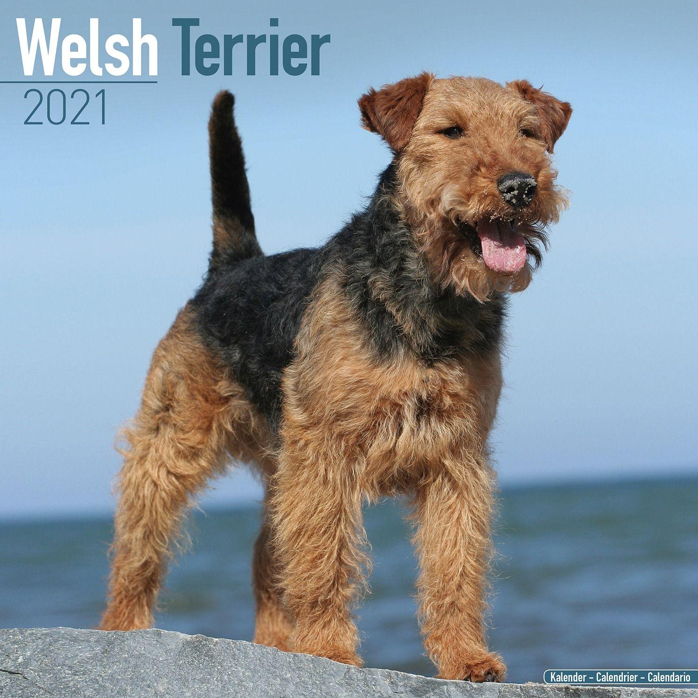Scottish Terrier Calendar 2021 Premium Dog Breed Calendars